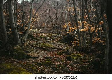 The dense forest in the mountains. The autumn woods.