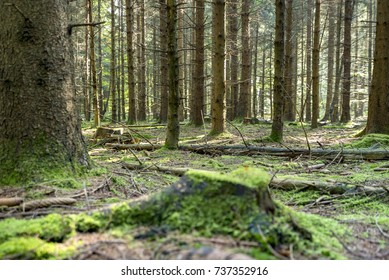 dense forest scenery with mossy ground cover vegetation at late summer time