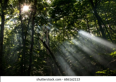 In the dense forest, through the foliage, sunbeams, smoke from a fire in the forest, fog - Crimea, the Chatyr-Dag plateau