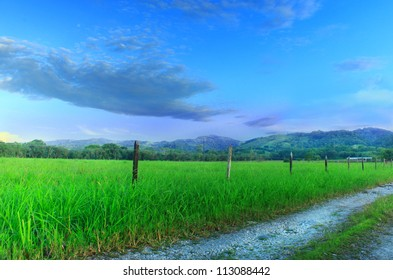 Dense grassy field next to dirt road with mountains and blue sky in distance.