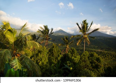 dense green rain forest landscape and in the background the caldera rim with the top a vulcano, coconut palm trees in front