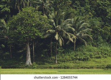 The dense greens of the Asian forest. The exotic plants. Stunning landscape. The palms surrounded by the bushes and grass. The horizon view shot in the green tints. Beauty of the wild tropical nature.
