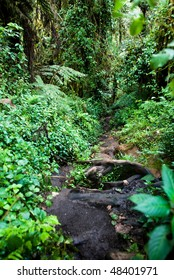 Dense and lush vegetation and trees of Tanzania's Rain Forest