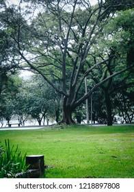 Dense rain in trees of Ibirapuera Park