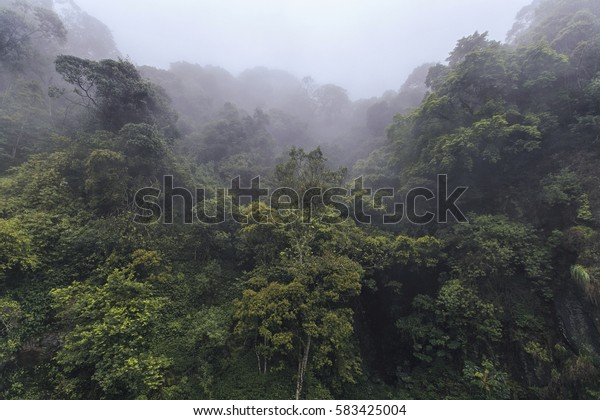 Dense tropical forest in the fog.