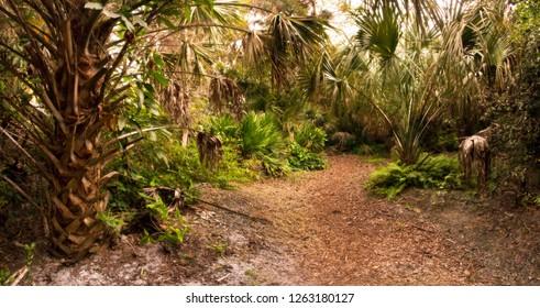 Dense tropical hardwood hammock in South Florida, at Dusk