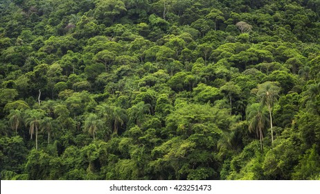 Dense tropical rainforest in Brazil, nature background.