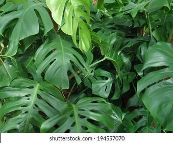 dense vegetation of foliage plants