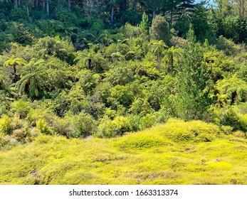 Dense vegetation in New Zealand