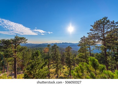 Densely forested landscape in Custer State Park in the Black Hills of South Dakota