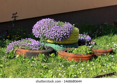 Densely planted Creeping phlox or Phlox subulata or Moss phlox or Moss pink or Mountain phlox evergreen perennial flowering plant planted in colorful old tyres used as garden decoration on warm sunny