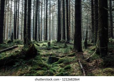 Densely wooded landscape