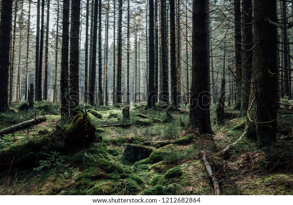Densely wooded landscape
