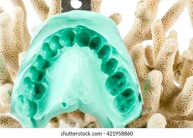 dental impression in alginate on coral  on white background