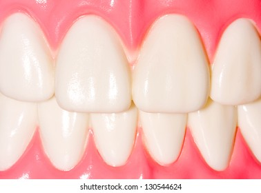 Dental model of frontal teeth