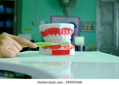 Dental Model On Dentistry Office Background