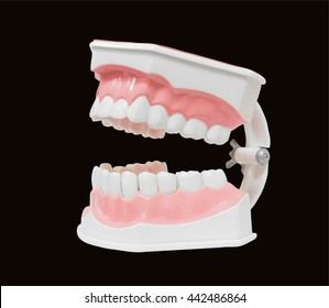 dental model of teeth and broken isolated clipping path  on black background