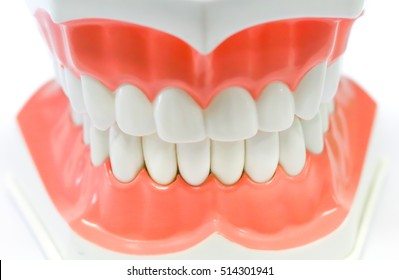 Dental Model of Teeth and broken tooth Isolated on white background clipping path