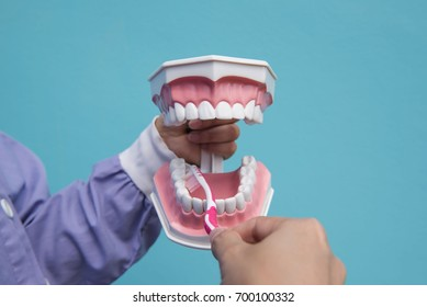 The dental model is used to teach how to brush the teeth properly by doctors. Blue background.