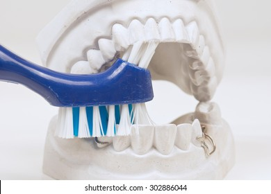 Dental mould with toothbrush on a white background