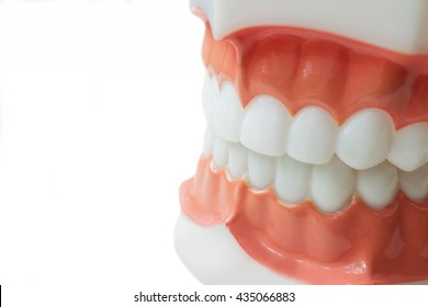 Dental teeth model on white background with clipping path