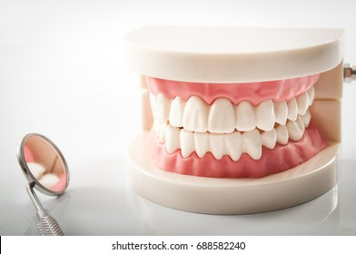 Dentist appointment, dentistry instruments and dental hygienist checkup concept with teeth model dentures and mouth mirror on a bright white background. Regular checkups are essential to oral health