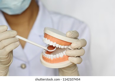 Dentist hand holding of jaw model of human teeth and toothbrush on white background, Healthcare and medicine concept
