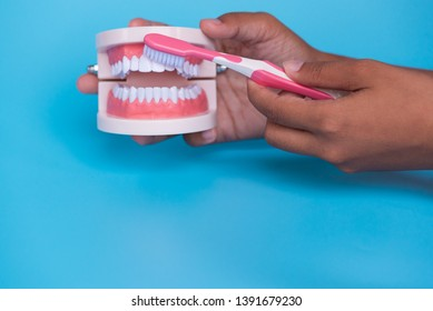 Dentist hand holding and showing tooth model with tooth brush demonstration for patient in the hospital on blue sky background.Dental healthcare education concept.