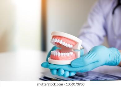 Dentist holding dentures in office room.