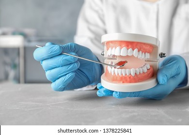 Dentist holding educational model of oral cavity at table in clinic, closeup
