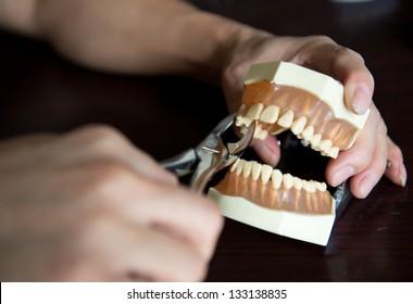 Dentist holding teeth model in his office