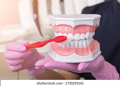 Dentist in pink gloves shows on fake jaw how to teeth brush. Hygienist concept of a healthy and beautiful smile