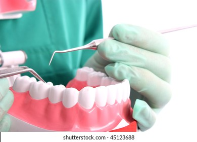 Dentist shows a model for healthy teeth