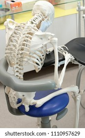 dentist in sitting,leaning position at work - human skeleton model  -  occupational disease concept