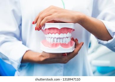 Dentist in uniform holding teeth model
