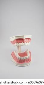 Dentoform