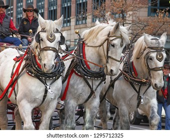 Denver, Colorado - January 10, 2019: Three beautiful Clydesdale horses running during annual Western Stock Show Parade