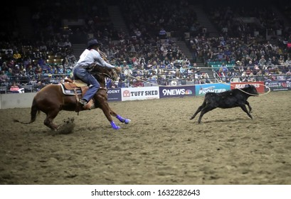 DENVER, COLORADO - JANUARY 25, 2020: Calf Roping at the National Western Stock Show
