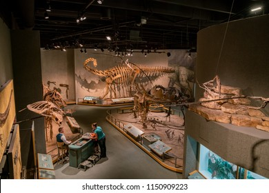 Denver, MAY 6: Dinosaur specimen of the Denver Museum of Nature and Science on MAY 6, 2017 at Denver, Colorado