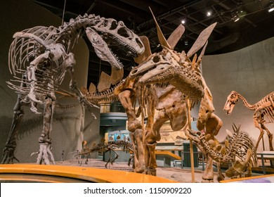 Denver, MAY 6: Interior view of the Denver Museum of Nature and Science on MAY 6, 2017 at Denver, Colorado