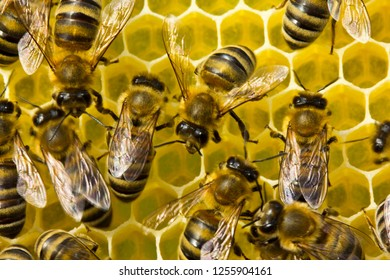 For deposition of queen eggs, placement of bees pollen and nectar bees build honeycomb.