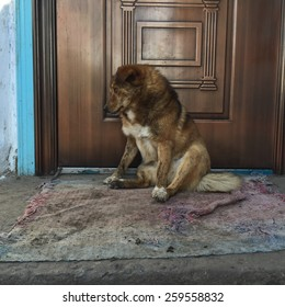 Depressed dog sitting at the door