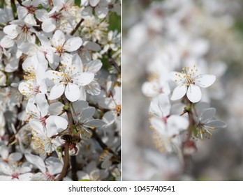 depth of field, comparison of two photos