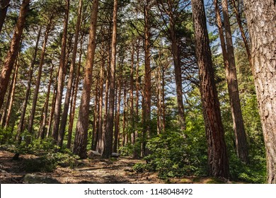 In the depth of the forest of the Moncayo natural park one summer morning. Spain