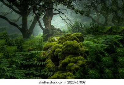 In the depths of a mossy forest. Mossy forest mist. Misty forest green moss view. Green moss in misty forest