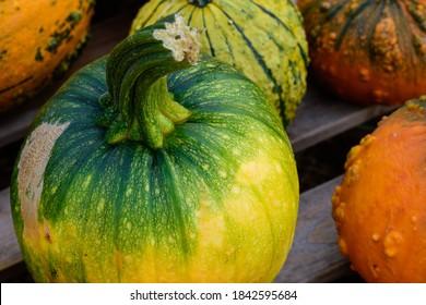 Der Kürbis, Cucurbita, ist eine einjährige Gemüsepflanze. Er wird auch zur Dekoration bei Halloween genutzt.