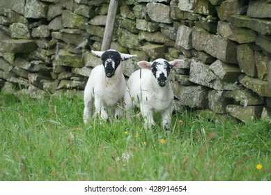 Derbyshire Gritstone Lamb
