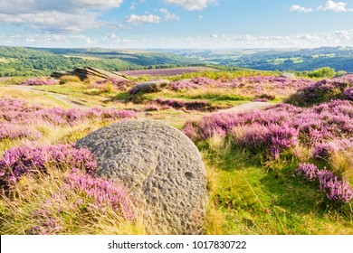 The Derbyshire Peak District  on a July summer day. Purple heather grows between rock formations. An abandoned millstone sits in the foreground.