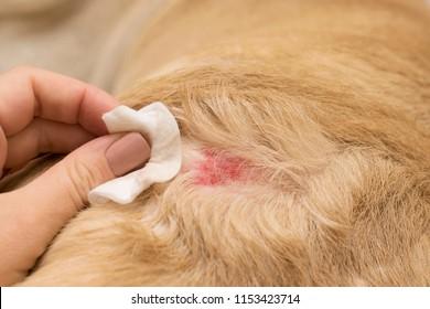 Dermatological allergy in dogs.