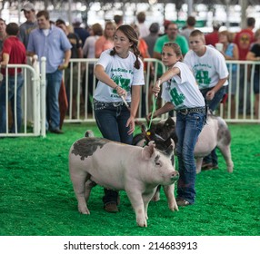 DES MOINES, IA /USA - AUGUST 10: Unidentified teens exercising and showing swine at Iowa State Fair on August 10, 2014 in Des Moines, Iowa, USA.